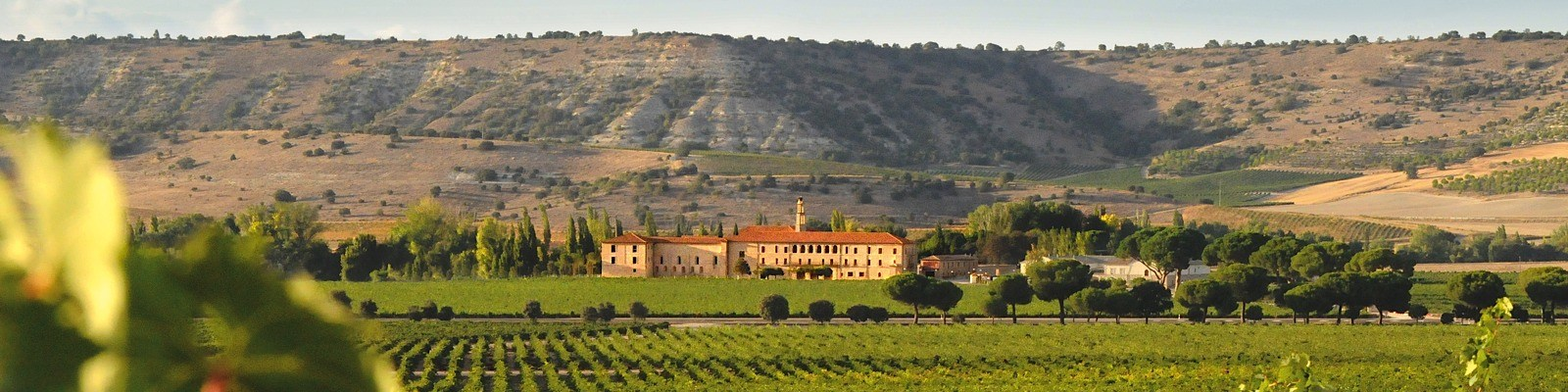 Abadia_Retuerta_Vineyards